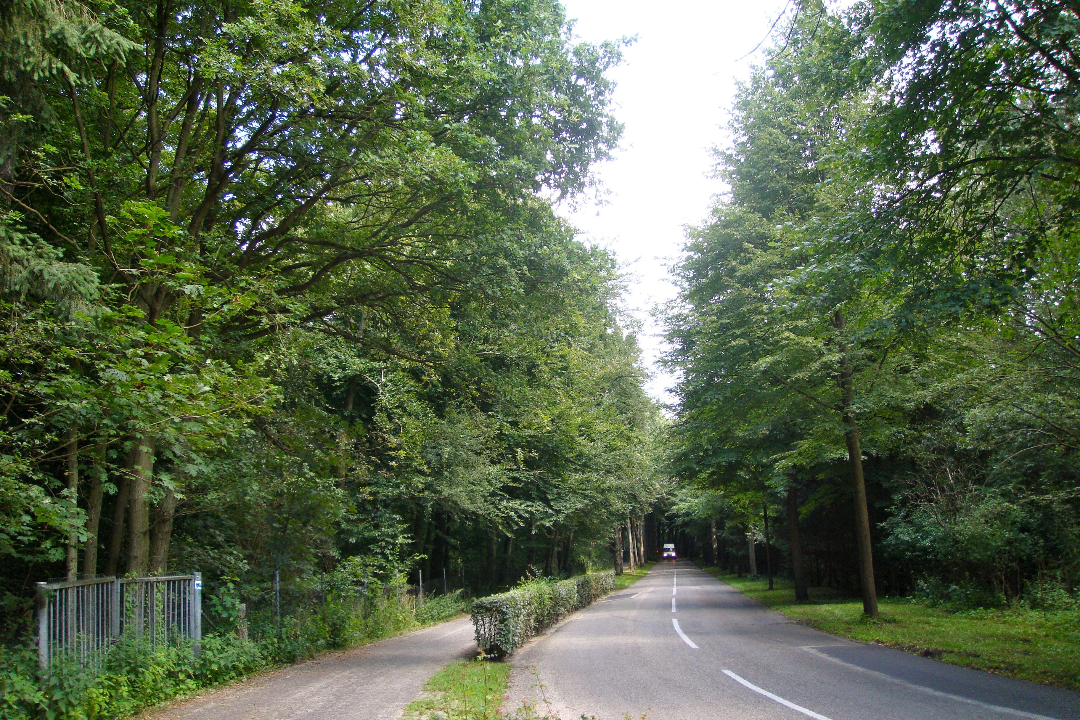 IJmuiden aan Zee Nordwijk Trees
