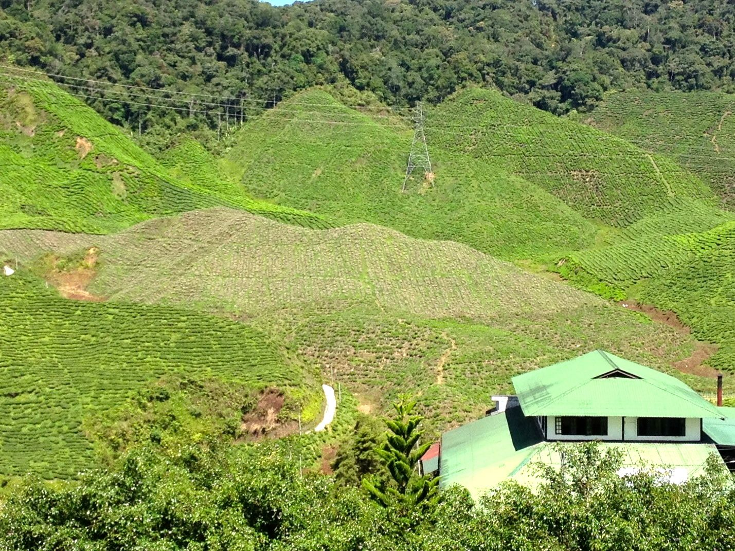 Cameron Highlands Bharat Tea View