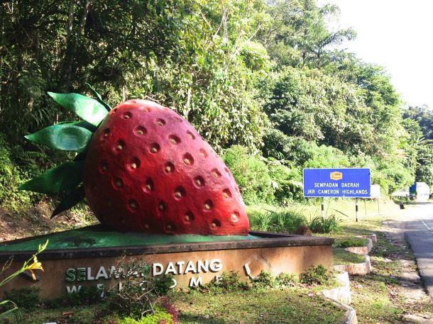 Cameron Highlands Strawberry