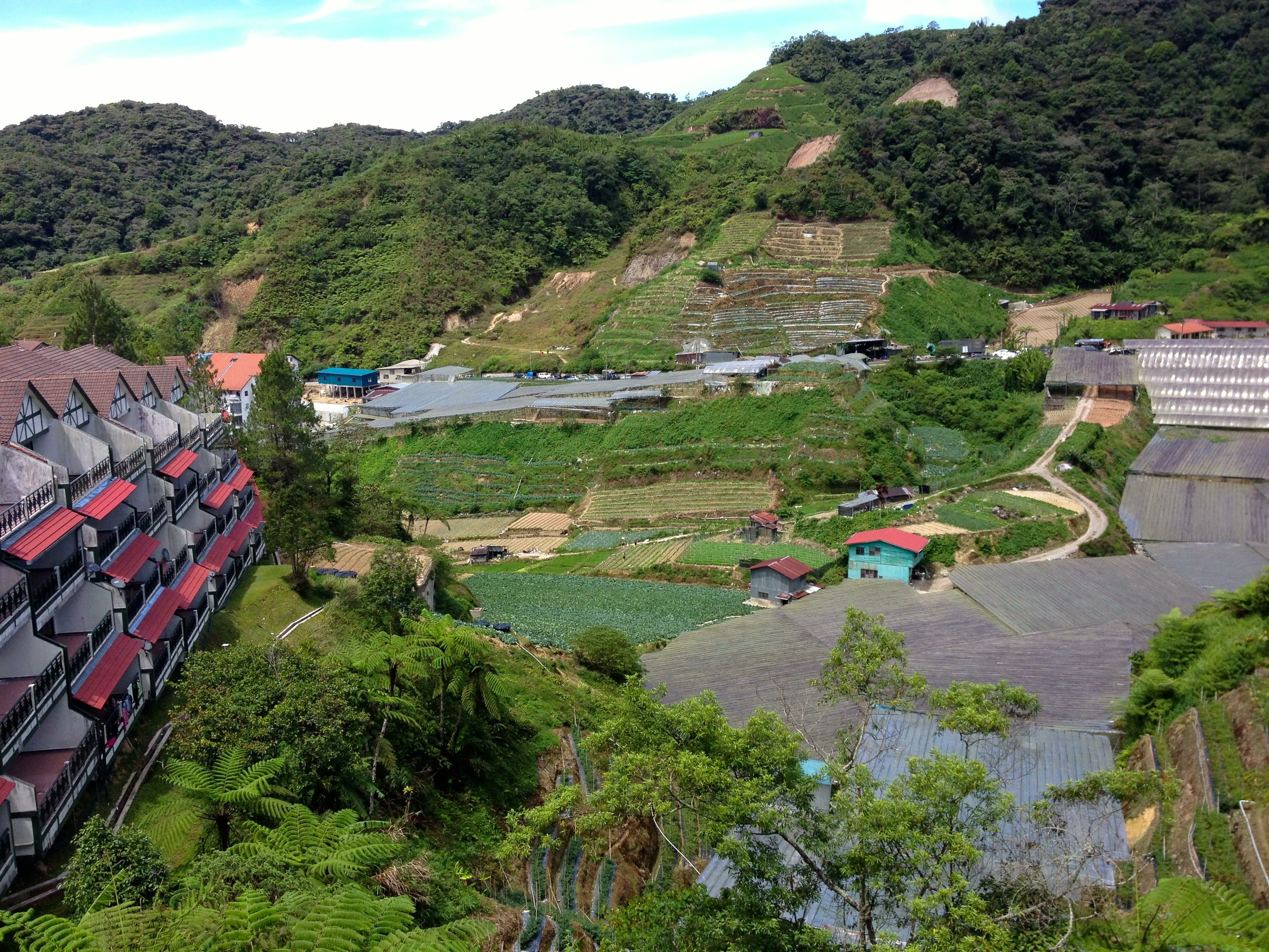 Cameron Highlands Vegetable Plots