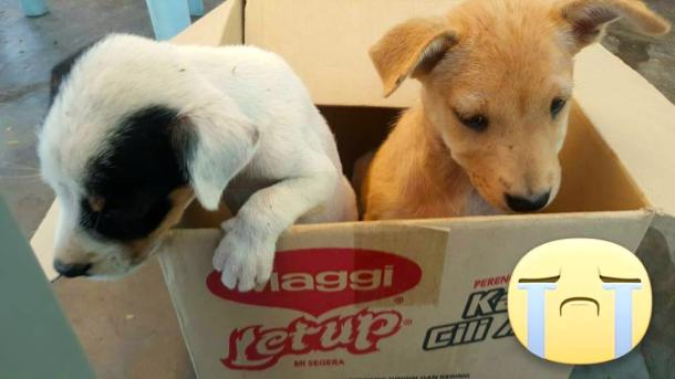 Fraser's Puppies Luanne Sieh