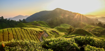 Cameron Highlands Banner Cycling Tips