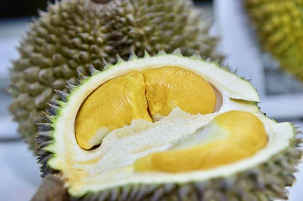 Day 1 Durian