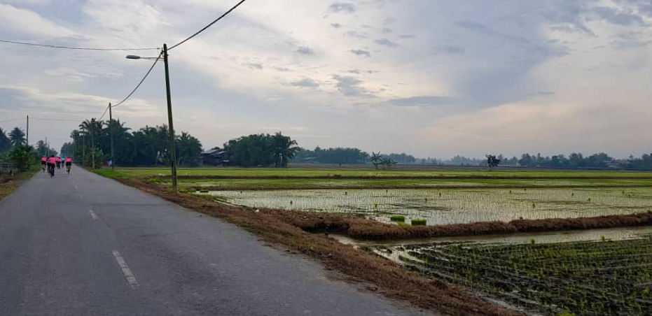 Teluk Intan Day 1 Paddy Fields 2 Marvin