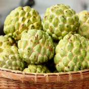 Day 2 Custard Apple